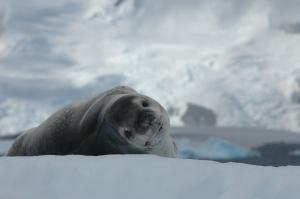 Antartica 13