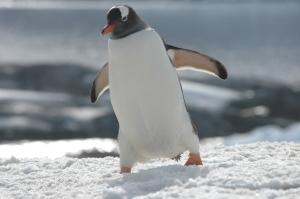 Antartica 23