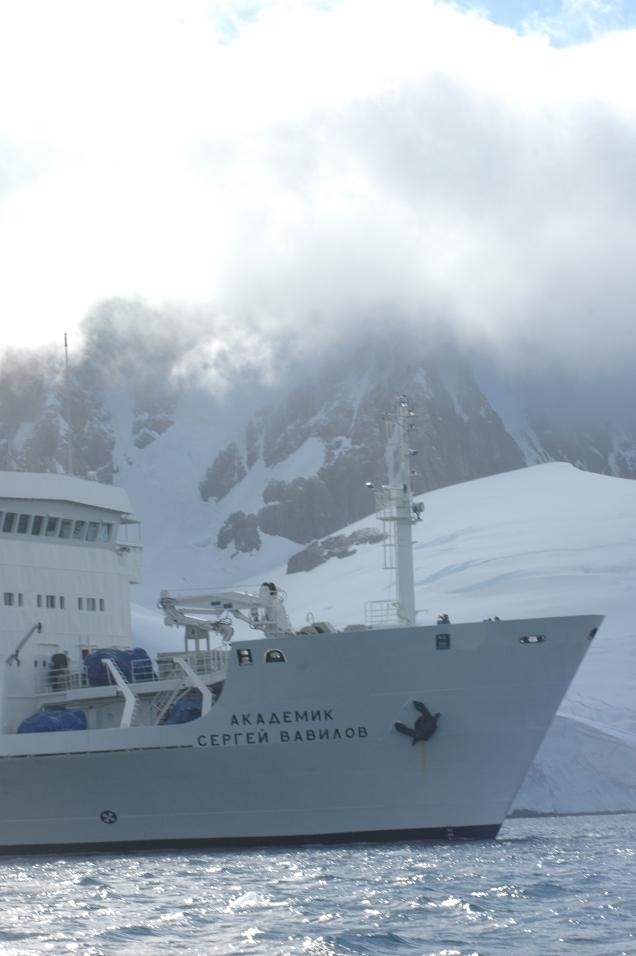 Antartica 6
